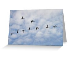 Tundra Swans in Flight Greeting Card