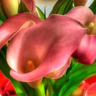 Pink Callas by Kim McClain Gregal