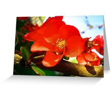 Flowering Quince in the Afternoon Greeting Card
