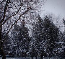Trees by Nicole Remolde