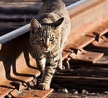 Rail Cat by Sue  Cullumber