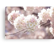 Pink and White Pompoms of Light Canvas Print