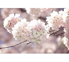 Pink and White Pompoms of Light Photographic Print