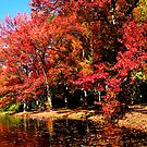 Red Trees by Lake by Susan Savad