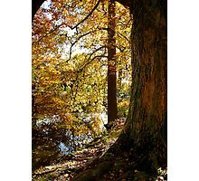 Autumn Perspective Photographic Print
