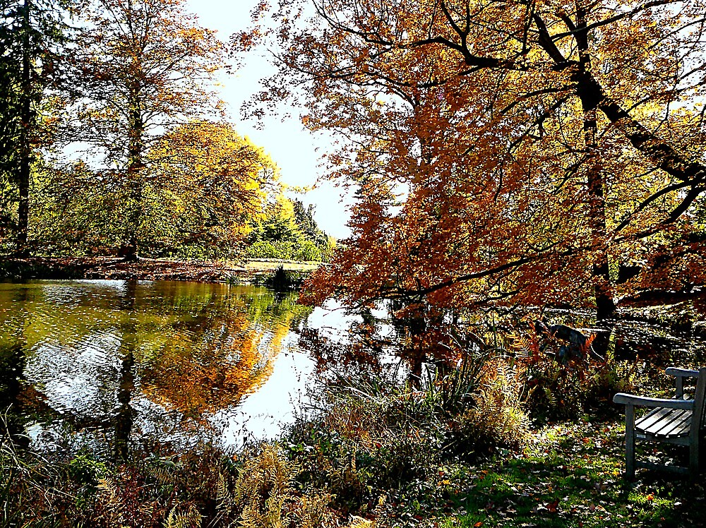 Autumn Reflections by Susan Savad