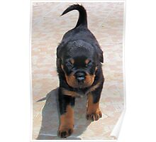Me and My Rottweiler Shadow Poster