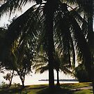 Coconut Palm by Matthew Walmsley-Sims