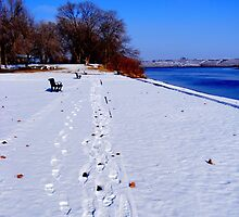 Beautiful Winters Day!! by stacyrod