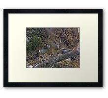 Playing In The Coulee Framed Print