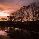 Pambula River by Shari Mattox-Sherriff