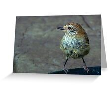 Little Feathered Friend Greeting Card