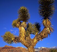 Mojave Yucca  by Mike Norton