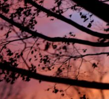 Sunset in the Maple Tree Sticker