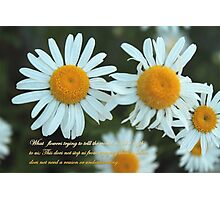 summer white daisy flowers picture with quote.  Photographic Print