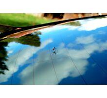 Spider on windshield Photographic Print