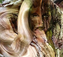 Dryad Eucalypt by Alison Gilbert