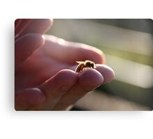 A wasp in the hand Metal Print