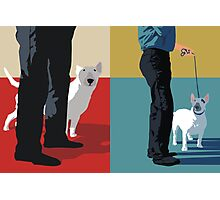 Bull terriers Photographic Print