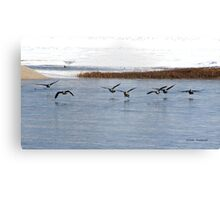 Canadian Geese Takeoff Canvas Print