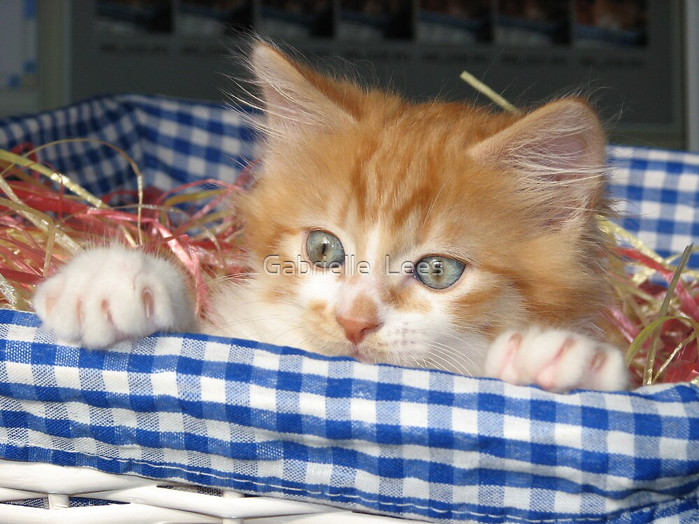 Kitty in a Basket by Gabrielle  Lees