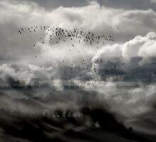 The Meadows in Winter Disturbance. by Kenart