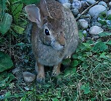 WILD RABBIT CAME VISITING..PILLOW,TOTE BAG,CARD,PICTURE,ECT.. by ✿✿ Bonita ✿✿ ђєℓℓσ