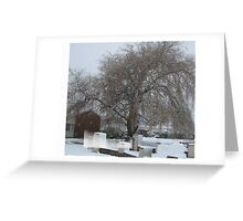Weeping Snow Willow Greeting Card