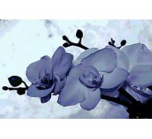 TINTED ORCHIDS Photographic Print