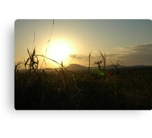 Grasses and distant sun Canvas Print
