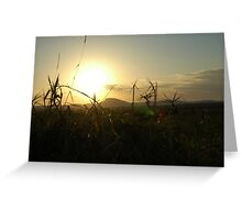 Grasses and distant sun Greeting Card