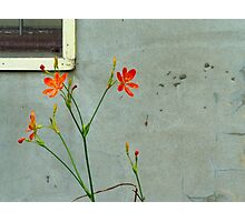Wall and Flowers Photographic Print