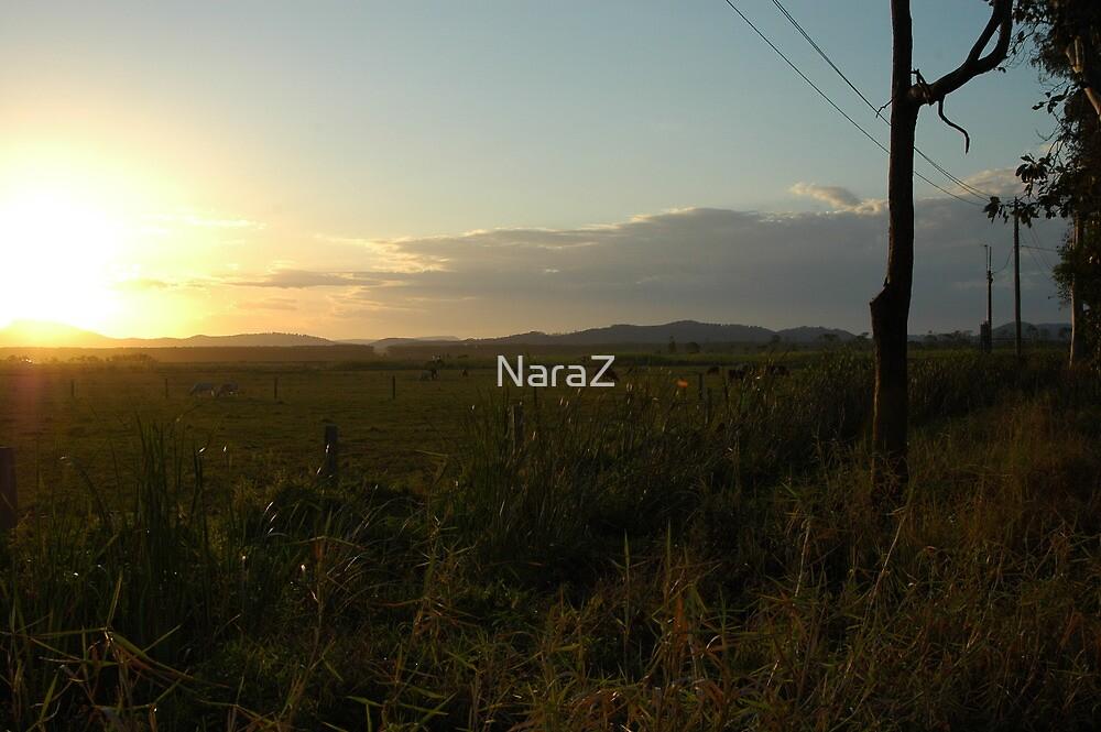 Open field by NaraZ