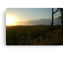 Open field Canvas Print