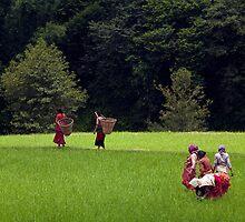 Fields. Changu Narayan by Claude  Renault