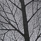 Ink Trees 2 by Christopher Clark
