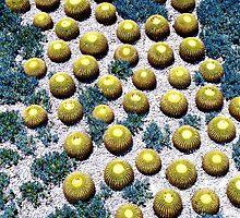 Cacti by Julie van der Wekken