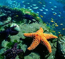 KEY WEST CORAL REEF AND SEA CREATURES by Elizabeth Giupponi