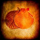 Seashells by Carlos Restrepo