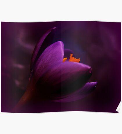 Passionate purple Poster