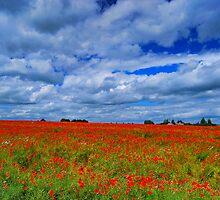A red poppy fields by marco10