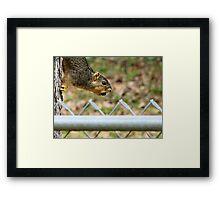 Acorn Thief Framed Print