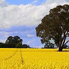 Yellow Fields by maureenclark