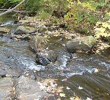 Running Creek by pambee68