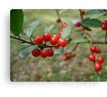 Yaupon Berries Canvas Print