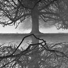 'Tree Reflects' by NaturesEarth