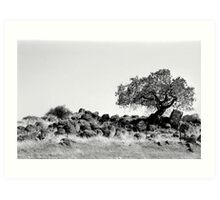 Gold Country-Marin County-CA Art Print