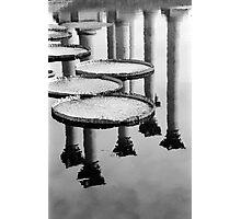 National Arboretum-Washington DC Photographic Print