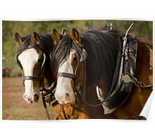 Clydesdale Brothers Poster