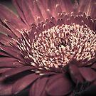 Red Flower Macro by Derik128